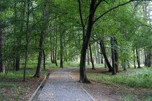 Парк Княжевска борова гора. Снимка Н. Трейман 2008 г.